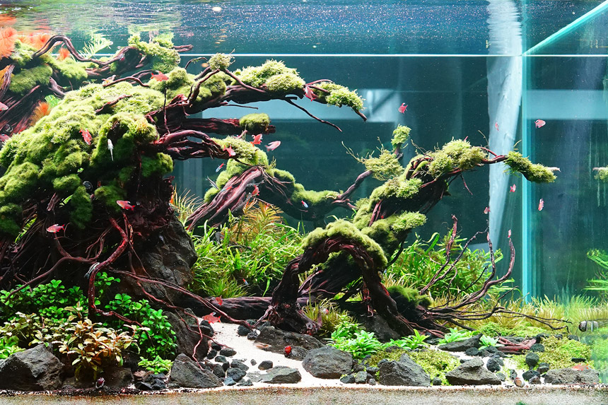 Planting Art Aquascape Artist Dave Chow On Underwater Creativity Home Journal